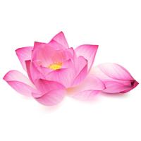Everything Lotus