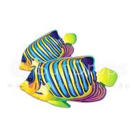Nature Magnet - Tropical Fish
