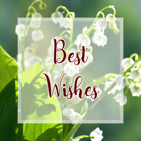 Best Wishes - Lily of the Valley
