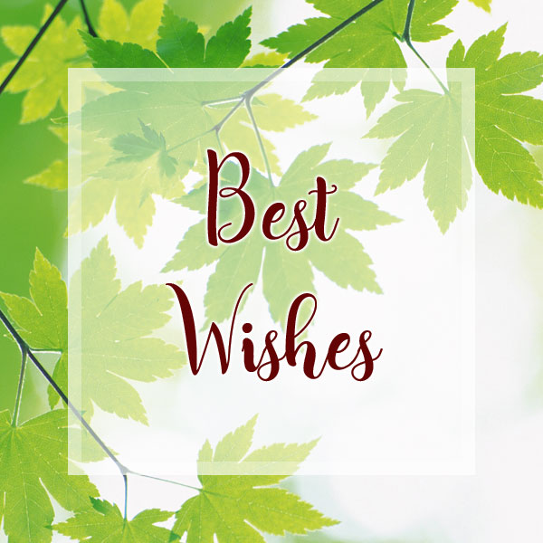 Best Wishes - Maple Leaves