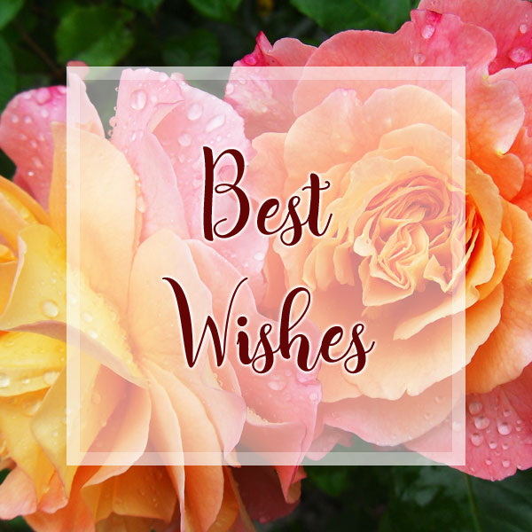 Best Wishes - Roses