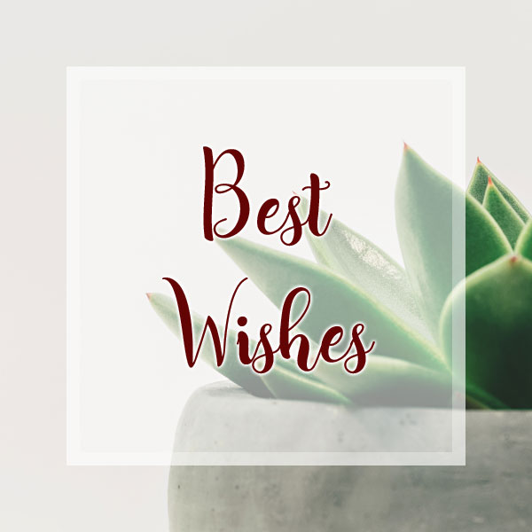 Best Wishes - Succulent