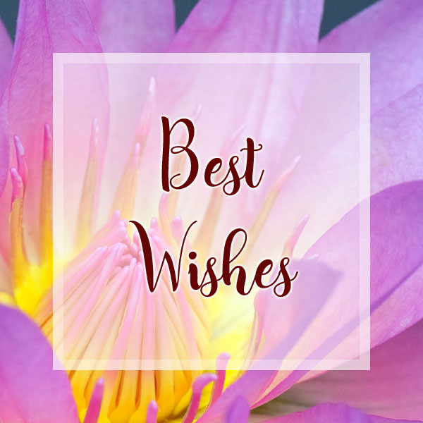 Best Wishes - Water Lily
