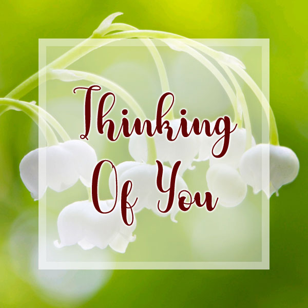 Thinking of You - Lily