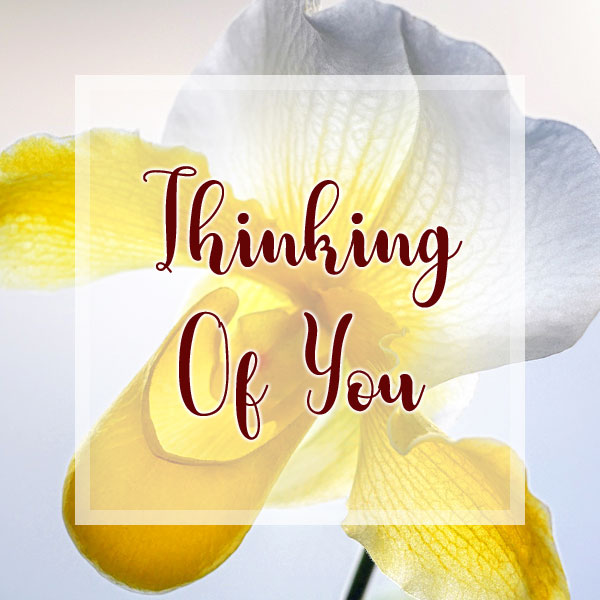 Thinking of You - Orchid