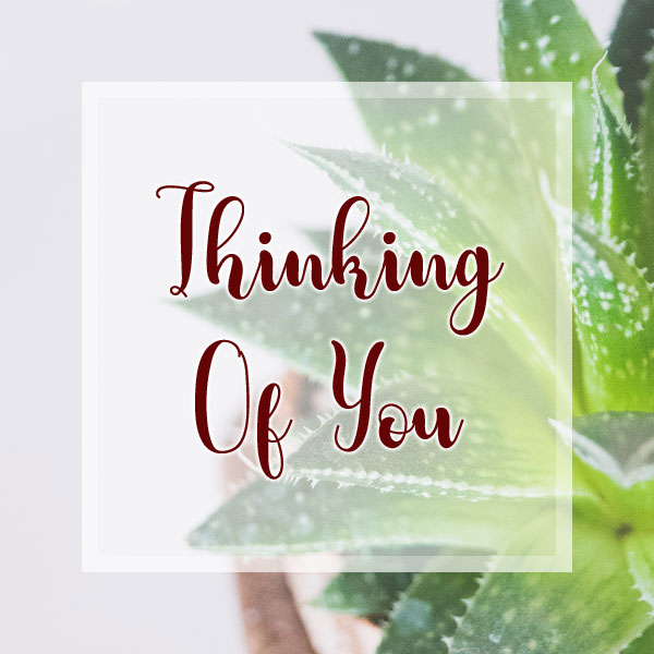 Thinking of You - Succulent